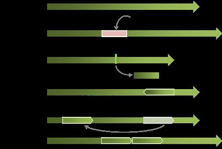 SV説明図