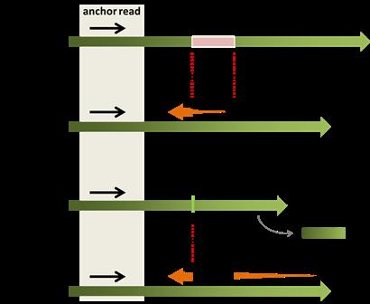 Split-read(Indel)